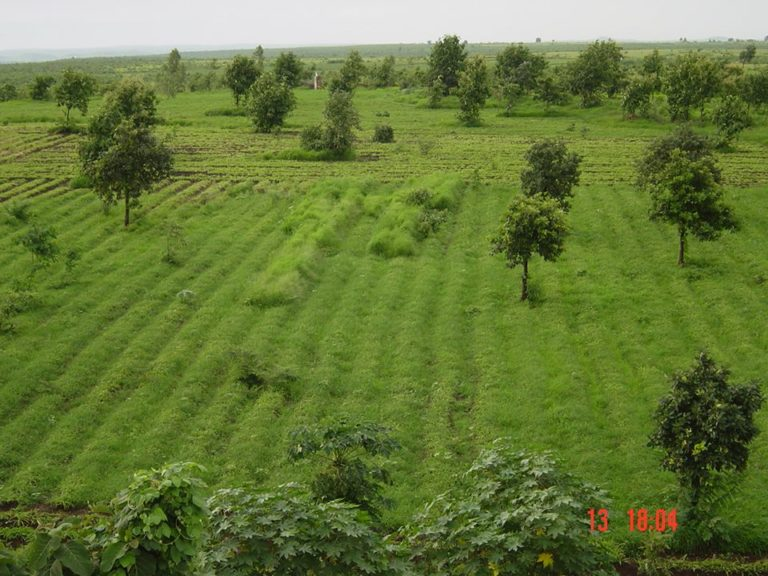 farm, sothia, jeevan herbs, herbal medicine