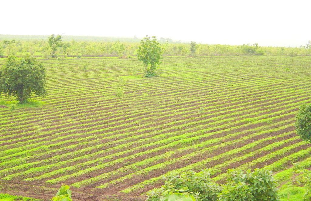 farm, ayurveda, medicine, no side effects