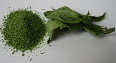stevia, natural sweetener , sweetener, Stevia rebaudiana, diabetes