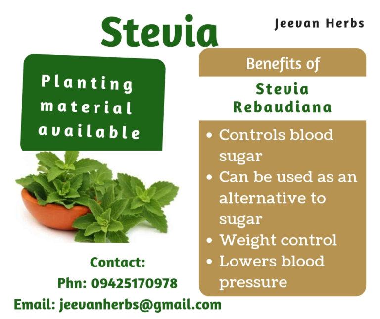 Stevia rebaudiana, stevia plant, natural sweetener, diabetes