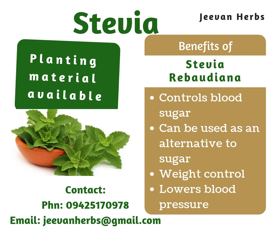 Stevia rebaudiana, stevia plant, natural sweetener, diabetes