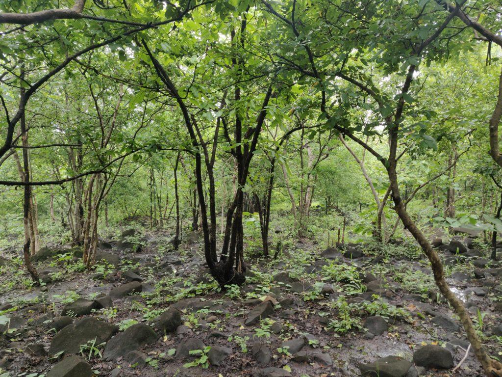 jeevan herbs farms, jeevan herbs
