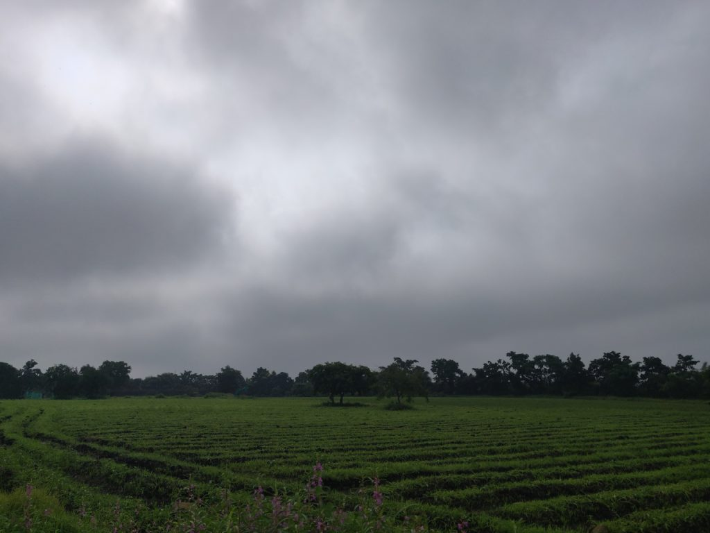 jeevan herbs farms, jeevan herbs , safed musli cultivation